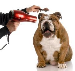 Dog Hairdry Bull Dog